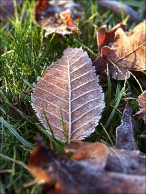 frostmorgen01
